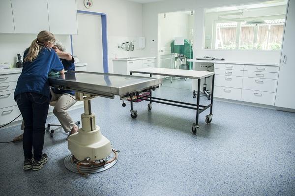 vorbereitung-kleintierpraxis-lombard-ag-lenzburg